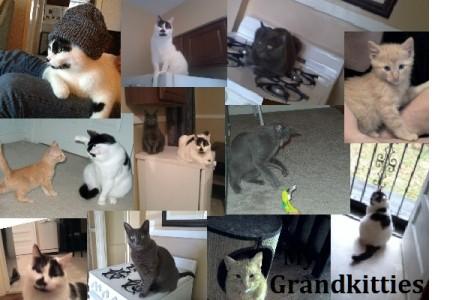 Proud Grandmother of 3 Grand-Kitties