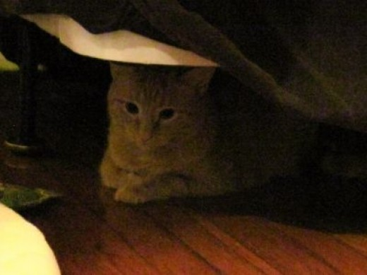 kitty under the bed