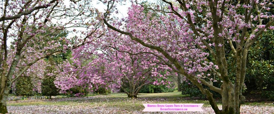 Pictorial Tour of the Memphis Botanic Gardens
