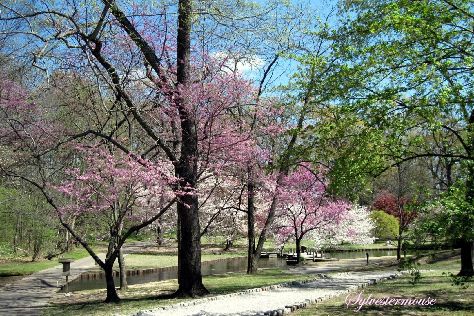 Stroll Through a Spring Paradise by Sylvestermouse