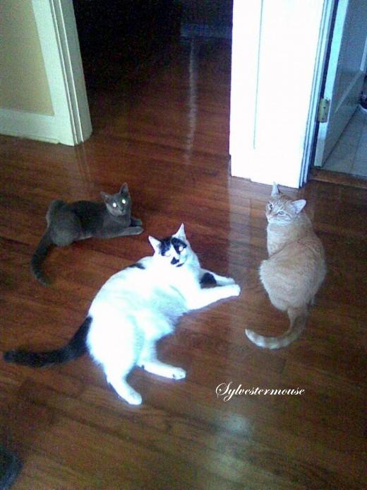 Grand-kitties