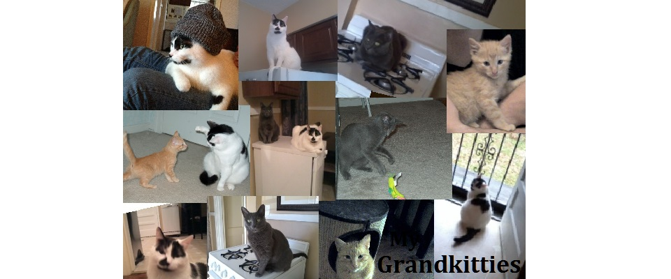 Proud Grandmother of 3 Grand-Kitties