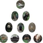Endangered Animal Ornaments