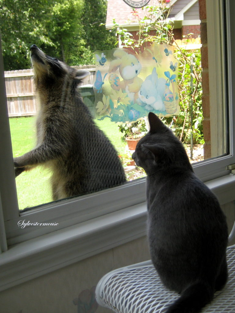 Kitty Studies Raccoon through Window
